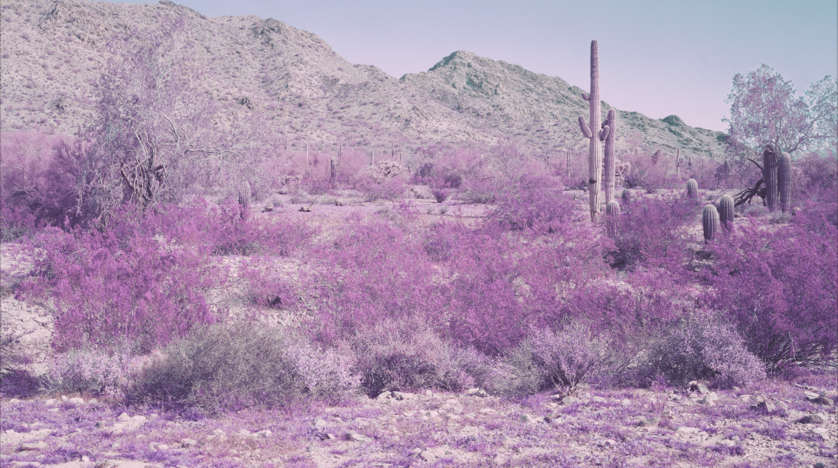 A treated photo of desert brush with red flowers.